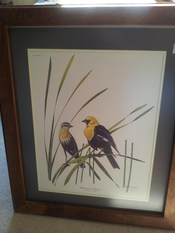 West Virginia's Ray Harm Yellow Black Bird Print
