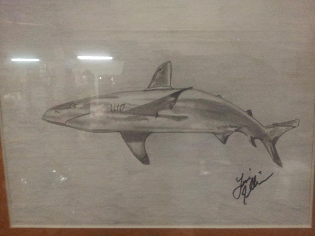 Shark in Pencil