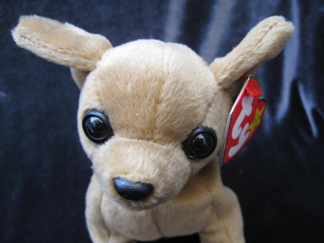 Ty Tiny The Chihuahua Dog  Retired Beanie Baby
