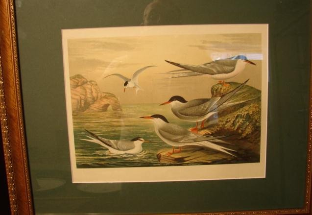 PAIR OF SIGNED BIRD PRINTS,FRAMED AND MATTED