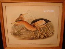 20TH CENTURY PRINT OF BIRDS, ARDETTA MINUTA