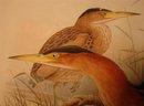 20TH CENTURY PRINT OF BIRDS, ARDETTA MINUTA