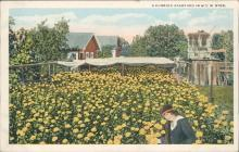 Vintage postcard, Florida backyard, flowers, H & W.B Drew Co.