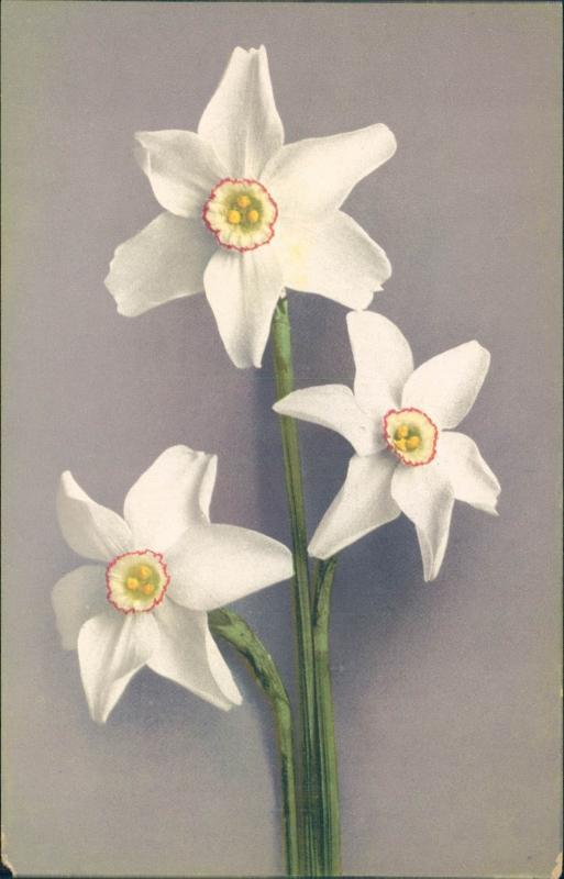 Vintage postcard, white flowers, Paul Bender, Switzerland