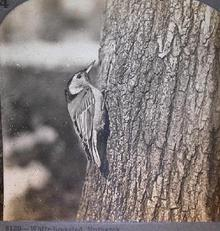 BIRD  STEREOVIEW -
