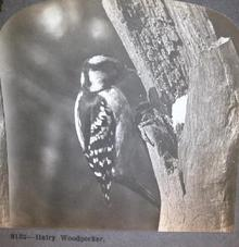 BIRD  STEREOVIEW -