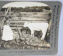 STEREOVIEW -  CUTE VIEW OF YOUNG GIRL AND HER CALF