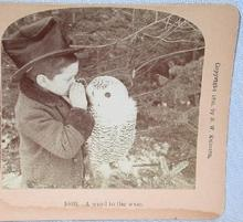 STEREOVIEW - YOUNG BOY AND AN OWL