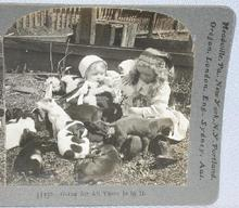 STEREOVIEW - YOUNG GIRLS AND THEIR PUPPIES