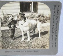 STEREOVIEW - YOUNG BOY & HIS DOG