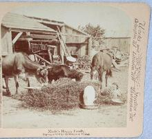 CUTE STEREOVIEW - MARIE'S HAPPY FARM FAMILY