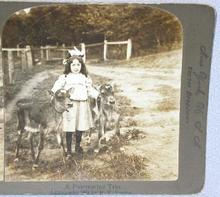CUTE STEREOVIEW -  A GIRL AND HER TWO CALVES
