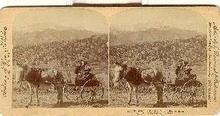 STEREOVIEW - COURTSHIP IN THE ROCKIES, COLORADO, U.S.A.