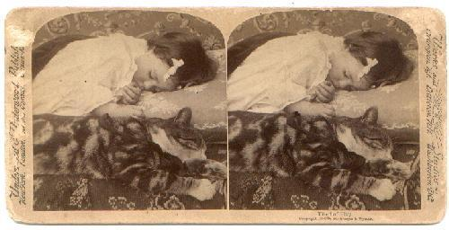 ASLEEP WITH THE CAT...  STEREOVIEW