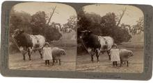 LITTLE FARM GIRL - STEREOVIEW