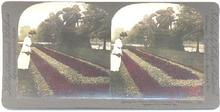 HAND COLORED STEREOVIEW - FAIRMONT PARK, PHILADELPHIA