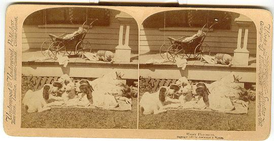 CHILD STEREOVIEW -  WEARY PLAYMATES