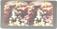 BEAUTIFUL HAND COLORED STEREOVIEW  -  FLOWERS IN FAIRMONT PARK