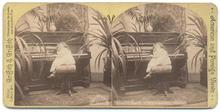 STEREOVIEW - LITTLE GIRL AND HER PIANO