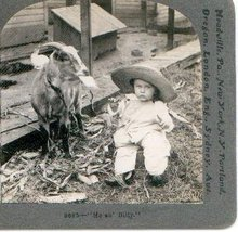 KEYSTONE STEREOVIEW  -  BILLY GOAT & BABY!