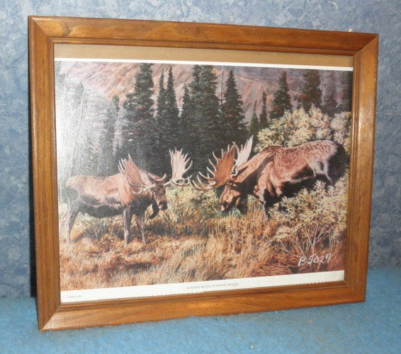 Picture Alaskan Moose