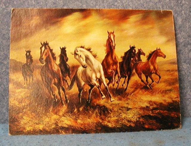 Wild Horses On The Run