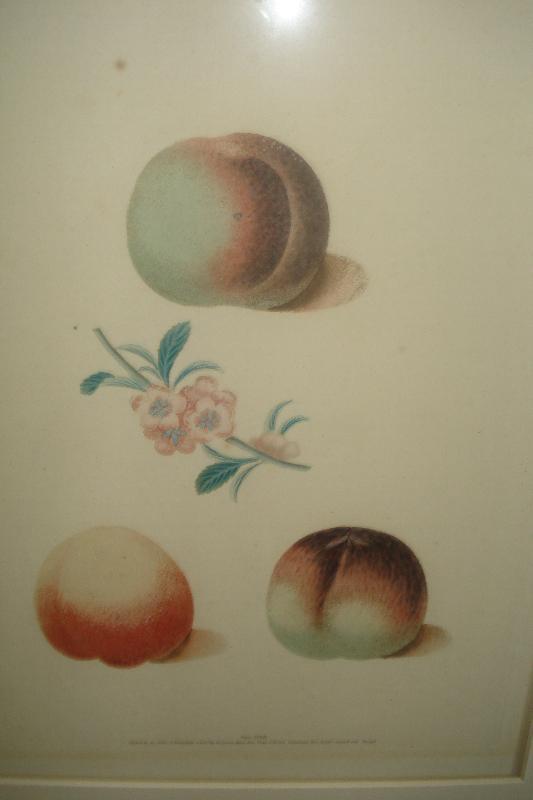 Pair Of Original Early Nineteenth Century Mezotint Engravings By George Brookshaw,