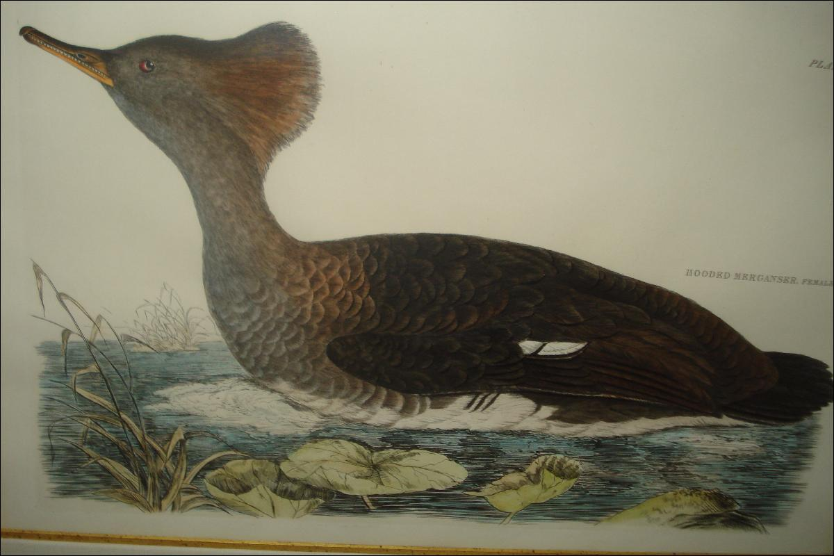 Original Early Nineteenth Century Hand Colored Aquatint Engraving By Selby,