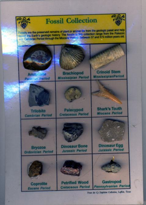 Framable Descriptive Display of 12 Different Fossils