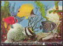 Lenticular Tropical Fish Postcard