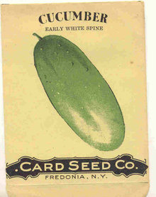 old 1910 FREDONIA NY CUCUMBER litho seed pack