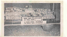 old vintage 1954 POSTED BW Pennies Postcard