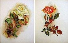 2 old vintage VICTORIAN LITH FLOWER PRINTS