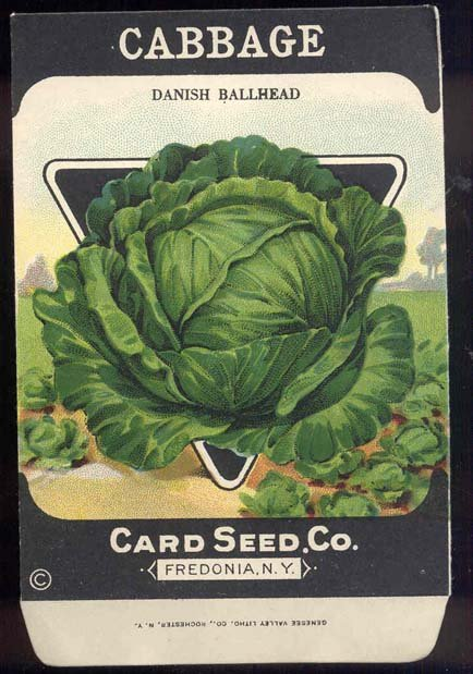 old vintage 1930s DANISH CABBAGE SEED PACKET ~ FREDONIA NY