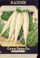old vintage 1930s WHITE RADISH SEED PACKET ~ FREDONIA NY