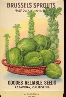 old vintage 1930s BRUSSEL SPROUTS SEED PACKET ~ FREDONIA NY