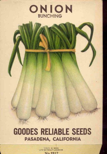 old vintage 1930s SCALLION ONION SEED PACKET ~ PASADENA CA