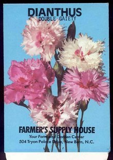 Dianthus Double Flower Seed Pack