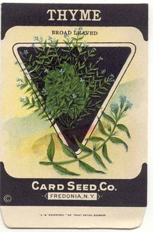 old vintage 1930s THYME HERB SEED PACKET ~ FREDONIA NY