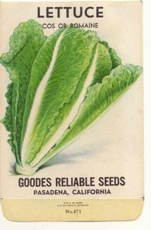 old vintage 1930s ROMAINE LETTUCE seed packet ~ pasadena california