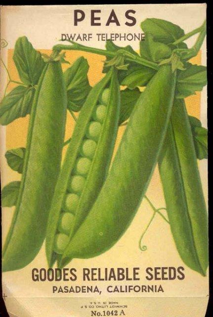 old vintage 1930s DWARF TELEPHONE PEAS seed pack ~ Pasadena California