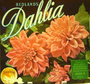 Sunkist Dahlia Crate Label