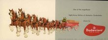 Budweiser Clydesdale Postcard