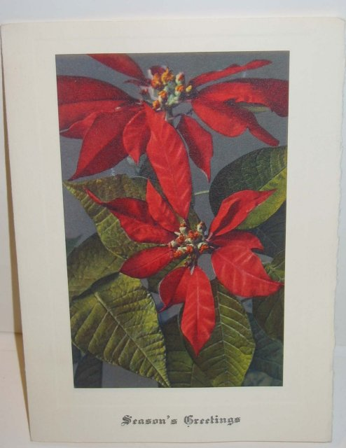 old vintage POINSIETTA FLOWER Xmas Card