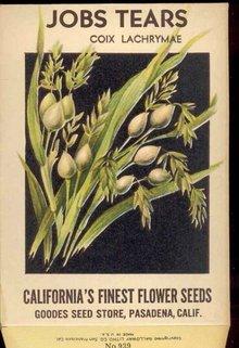 VINTAGE FLOWER PACK ~ JOB'S TEARS FLORAL ~ PASADENA CALIFORNIA 1920S