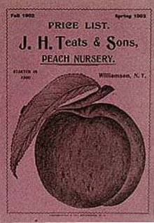Peach Teats Nursery Booklet NY