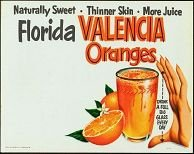 Florida Oranges Sign 1950s vintage