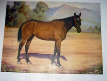 Malicious Horse Print ~ Khayyam