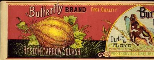 ANTIQUE 1890S OLNEY & FLOYD BUTTERFLY SQUASH CAN LABEL