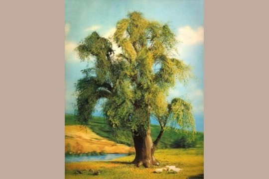 Lenticular Weeping Willow Picture